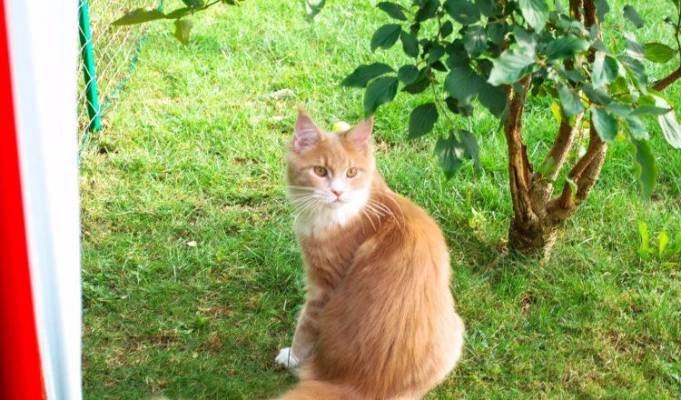 Membre du Cat Club Romand