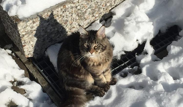 La neige? pas peur…
