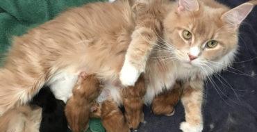 Naissance de nos premiers bébés