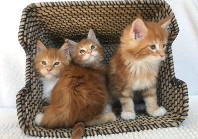 * Tous nos chatons ont trouvé une nouvelle famille *